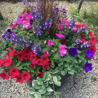 Colorful Arrangements for deck or patio