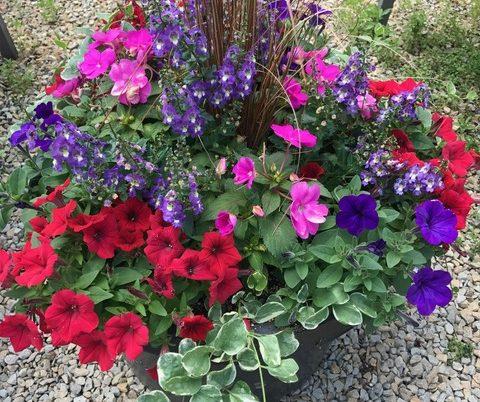 Colorful Arrangements for deck or patio