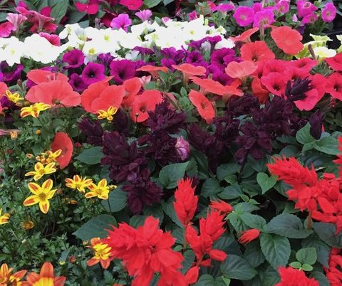 Colorful flowers and plants