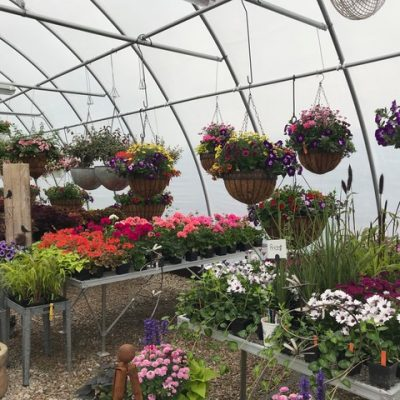 A full greenhouse of plants and flowers